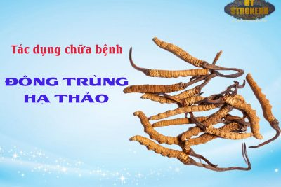 Tác dụng chữa bệnh của Đông Trùng Hạ Thảo